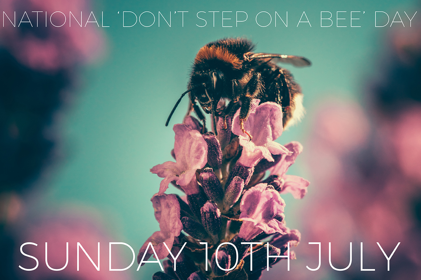 dont step on a bee